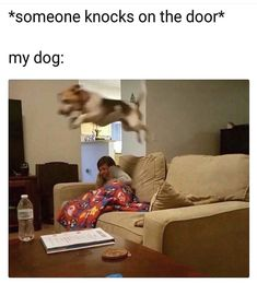 Animal Memes to Make You Laugh on Bad Days - 24