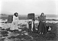 [Three women with baskets gathering seaweed on the Irish Coast, Ireland]