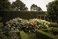 "Take a tip from the Hamptons, or good ole merry England and use greenery for a ""fence"".  From ""A Look at Ina Garten's Garden"" via WSJ.com"