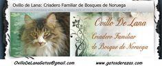 criador de gato persa y exotico