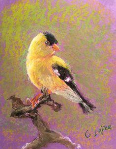 Yellow bird study, oil pastels