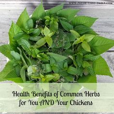 Handy list of helpful herbs for chickens & ducks from Fresh Eggs Daily.