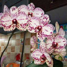 158 отметок «Нравится», 10 комментариев — myflowers (@irina_my_flowers) в Instagram: «Очаровательная Alexandra, каждый цветочек интересно рассматривать 😍💓 Милые веснушки даже на губе,…»