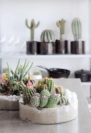 Indoor baby cactus