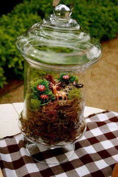 Could do one terrarium per table, themed. Like gnome table, dragonfly table, toadstool, salamander, blueberry etc.