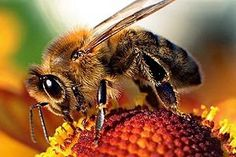 Health is Wealth: More than 40 reasons to use honey for better health