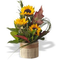 Sunflower Arrangements | sunflower patch three sunflowers in a fall day setting $ 29 00 cdn