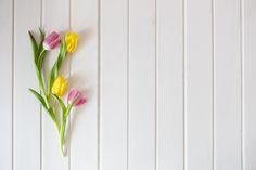 Branca superfície de madeira com tulipas bonitas Foto gratuita