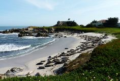 Harbor Seals on a beach in Monterey, CA Harbor Seal, Seals, Beautiful Places, Waves, Europe, Tours, Beaches, Outdoor, Animals