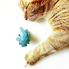 [magickmoods.com] #magick #witchcraft #witch #witchy #witchesofinstagram #pagan #paganism #wicca #wiccan #spiritual #namaste #newage #metaphysical #freespirit #gypsy #sacredspace #lifelessons #meditation #motivation #crystal #crystals #catsofinstagram #orangecats #tabby #cats #furbaby #tabbycat #quartz #magickmoods