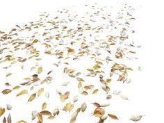 Autumn Leaves, Photoshop, Landscape, Plants, Image, Scenery, Fall Leaves, Autumn Leaf Color, Plant