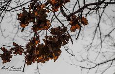 Autumn leaves Vernon Park Vernon, Autumn Leaves, My Photos, Park, Photography, Photograph, Fall Leaves, Fotografie, Autumn Leaf Color