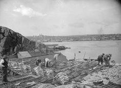 Drying codfish, St. Johns, NF, about 1900