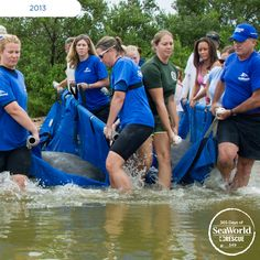 This four-manatee release took more than 20 people to carry all the animals -- and tons of coordination! #365DaysOfRescue
