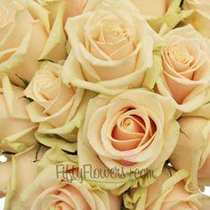 FiftyFlowers.com - Creamy Peach Talea Sweetheart Rose