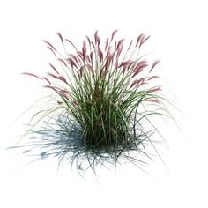 Green Miscanthus Sacchariflorus available in OBJ, bush bushel feather green, ready for animation and other projects Modele Sketchup, Leaf Clipart, Human Figure Drawing, Watercolor Trees, Tree Silhouette, Ornamental Grasses, Landscaping Plants, Aesthetic Backgrounds, Photoshop Elements