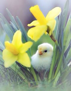 Image via We Heart It https://weheartit.com/entry/163167183 #blossom #Chicken #classic #colour #dreamy #fineart #Fleurs #flores #flowers #illustrations #light #nature #pastel #photography #pretty #romantic #spring #sunlight #wallart #wallpaper #wildlife
