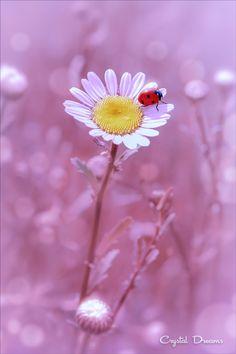 """Pure camomile"" by Tatiana Krylova*"