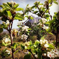Puig Campana entre flores.#peralesenflor #desdeelparaíso #PuigCampana #lomirescomolomires #ItxasmendiNosCuida #Finestrat