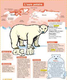 Fiche exposés : L'ours polaire Plus