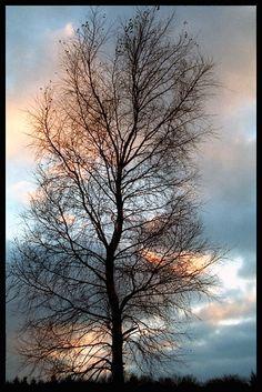 Aurora Borealis | Autumn tree, Gowidlino, Poland Copyright: Joanna Boj