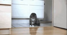 Is that a crumb on the floor? (GIF)