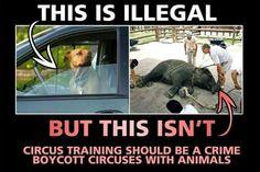 Anti-circus & animal rights Cane Corso, Sphynx, Peta, Chinchilla, Rottweiler, Pitbull, Evolution, Stop Animal Cruelty, Believe
