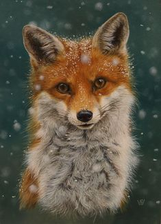 Winter fox - maybe painted as a wooden sign or ornament, . - Winter fox – maybe painted as a wooden sign or ornament, - Cute Baby Animals, Animals And Pets, Anime Animals, Beautiful Creatures, Animals Beautiful, Fuchs Baby, Fox Pictures, Fox Art, Cute Fox