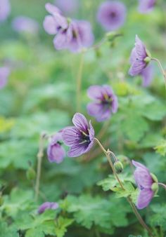October favourites | Gardens Illustrated