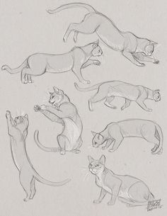 cat gesture sketches