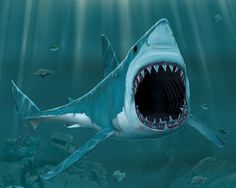 Ocean Animals Blood For The Sharks - Your HD Wallpaper #ID70567 (shared via SlingPic)