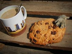 want my cookie
