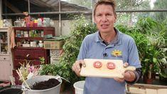 pfirsich durch samen vermehren pflanzenvermehrung gartentipps blumen pflanzen pinterest. Black Bedroom Furniture Sets. Home Design Ideas