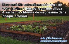 Chlorure Magnésium Potager - 1 fois par semaine, a l'arrosage : 1. Remplis arrosoir. 2. Ajoute 1 sachet chlorure magnésium. 3. Arrose comme votre habitude. C'est tout ! Votre potager enrichi 1 bon engrais naturel - Le magnésium donne 1 engrais naturel qui repousse maladie du potager. . De + Il rend les légumes + gouteaux - Il s'utilise en cure pour parer certaine maladie