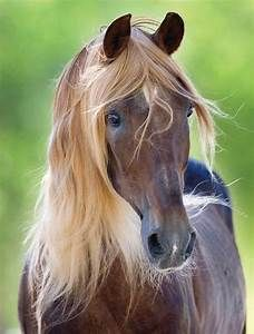 Rocky Mountain Horse | farmy, farm, farm, FARM!!! | Pinterest