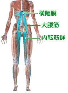 しゃがめない原因は大人も子供も同じ【柔らかくするべき4つの関節】 | セルフケアラボ【柴雅仁Blog】 Referred Pain, Muscle Anatomy, Hand Therapy, Foot Pain, Qigong, Science And Nature, Face And Body, Human Body, Body Care