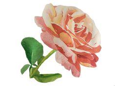 #Watercolour #Watercolor #Rose #art #brigitteklassenart