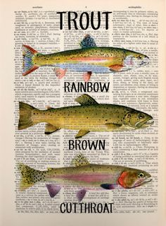 SaleShips Dec 2 Trout print on page from an by Lexiconograph