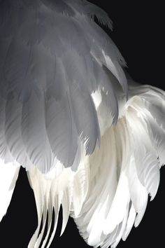 Angel Wings Angel Message Close your eyes and visualize our wings wrap around your heart and around your shoulders Feel the love and receive the blessings Love your guardian Angel. Black Angel Wings, Black Angels, White Wings, Angels Among Us, Angels And Demons, Fallen Angels, Anime Angel, Seraph Angel, The Wicked The Divine