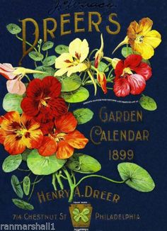 1899-Dreers-Garden-Vintage-Flowers-Seed-Packet-Catalogue-Advertisement-Poster