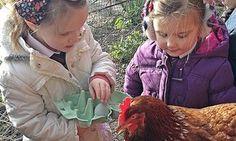 Chickens with school children