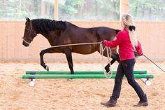 Longieren einmal anders: Trainingsplus mit der Quadratvolte | Pferderevue | Ausbildung