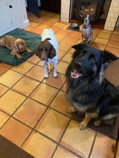 Dog Hotel, New Forest, Pugs, Animals, Animales, Animaux, Animal, Animais, Pug Dogs