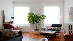 Deze planten zijn een must om in uw huis te hebben: ze beschermen tegen straling, chemicaliën, schadelijke sigarettenrook…