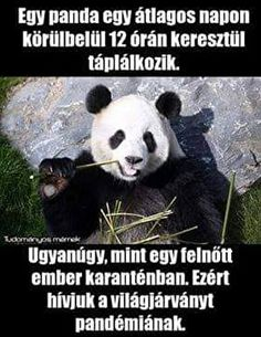 Funny Quotes, Funny Memes, Jokes, Panda Bear, I Laughed, Haha, Comedy, Funny Pictures, Animals