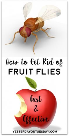 How to Get Rid of Fruit Flies For Good !