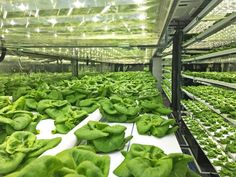 Local Roots, TerraFarm, Local Roots shipping container farms, hydroponic, less water, more food, shipping container farms agriculture, future of agriculture #urbangarden
