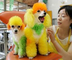 Colorful Dog Grooming