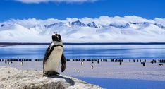 Ahead of World Penguin Day, The Latin America Travel Company have created a guide on where to see penguins in their natural habitats. Shiga, Weather And Climate, Climate Change, Cruise Destinations, Arctic Animals, Extreme Weather, Wanderlust Travel, Landscape Photography, Landscape Art