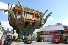 Em Okinawa, no Japão, fica um restaurante localizado em cima de uma figueira falsa